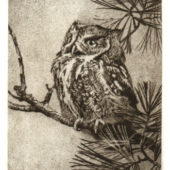 Owl-on-a-branch-rev-3