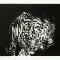 Erik Olson, White Tiger, 2011